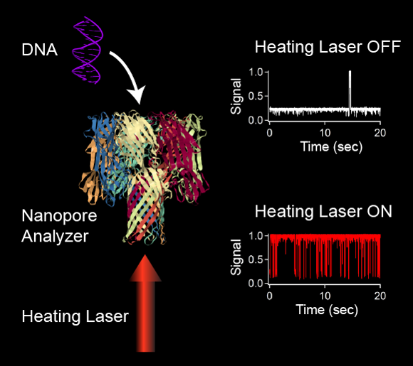 DNA molecules enter into the pore and cause the current signal to decrease.  At room temperature, double-stranded DNA molecules remain in the pore for long periods of time, which makes it difficult to analyze a DNA mixture.  Focusing a heating laser onto the nanopore speeds up the interaction of the DNA with the pore and yields a far greater number of events that can be analyzed to identify the DNA molecules in solution.  (DNA and nanopore analyzer images reproduced from the PDB: 10.2210/pdb2m2c/pdb and 10.2210/pdb7ahl/pdb respectively).